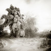 Nature 16